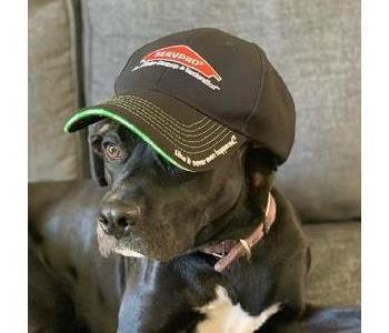Dog with SERVPRO hat